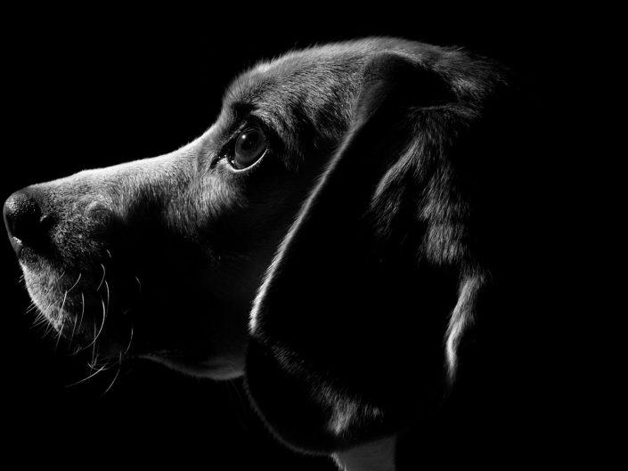 Haustierfotografie Hund