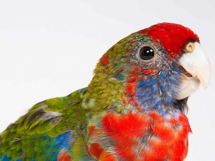 Tierfotografie Haustier